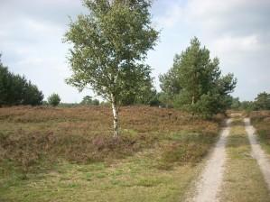 'Heidag' in Amstelveen