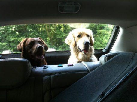 James en Bibi op weg naar het Amsterdamse Bos